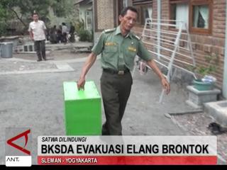 BKSDA Evakuasi Elang Brontok