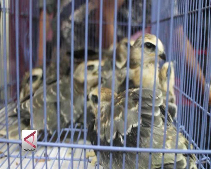 Polda Lampung Gagalkan Penyelundupan Elang