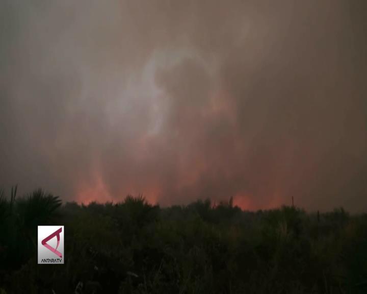 30 Hektare Lahan Gambut di Bengkalis Terbakar