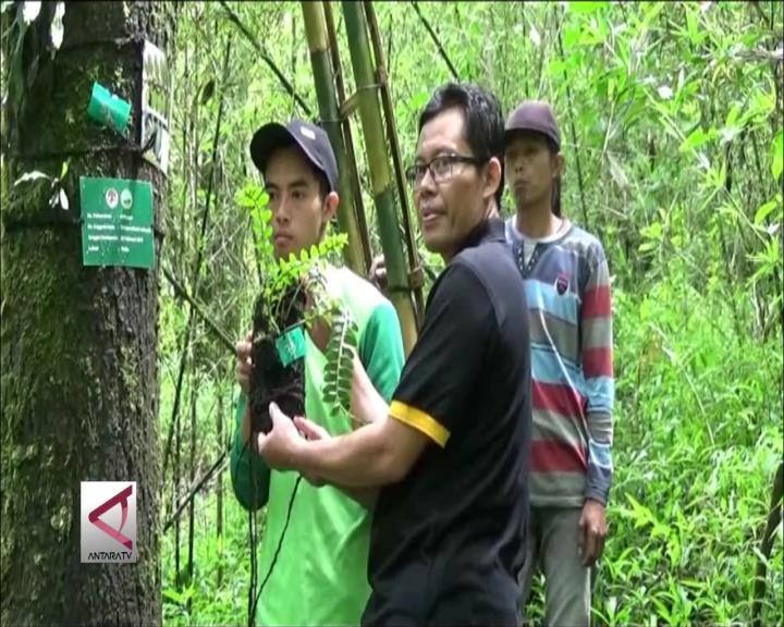 TNGM Kembalikan Endemik Anggrek Merapi ke Habitatnya