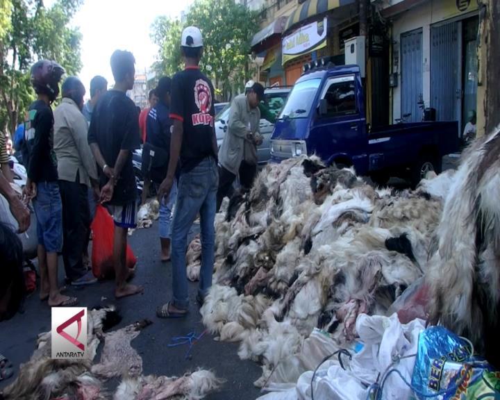 Berburu Kulit Hewan Kurban di Surabaya