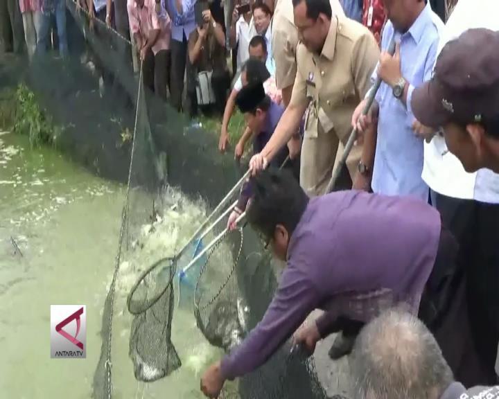 Mengatasi Tingginya Harga Pakan Ikan di Jambi