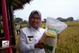 Membeli padi petani demi sejahtera bersama