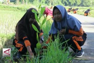 Pelajar Purworejo tanam pohon loka di sekolah