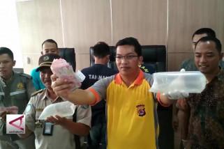 Percobaan penyelundupan 10.312 benih lobster di Banten