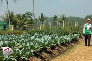 Meningkatkan produktivitas dengan teknologi pertanian