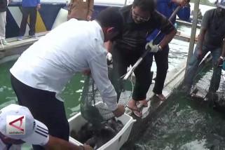 Gubernur Kepri bersama warga kampung air panen ikan