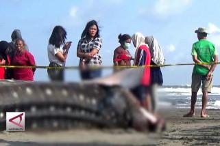 Penyebab kematian hiu paus di pantai Parangkusumo