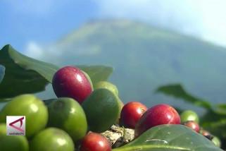 PPHT tingkatkan produktifitas dan kualitas kopi