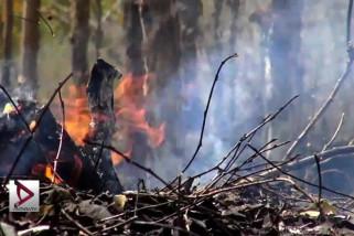 Lahan & Hutan di Bantul kini rawan terbakar