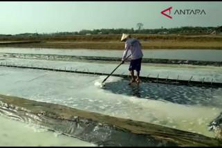 Video - Petani garam keluhkah rendahnya harga jual