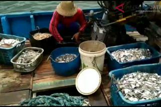 Video - Hasil tangkapan nelayan Jepara meningkat