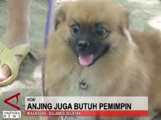 Anjing Juga Butuh Pemimpin
