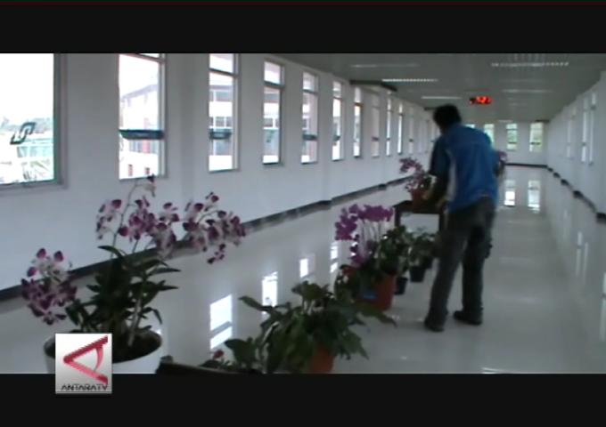 Pesona Anggrek Di Bandara Pattimura