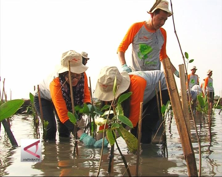 Relawan Gencar Tanam Mangrove Di Jakut