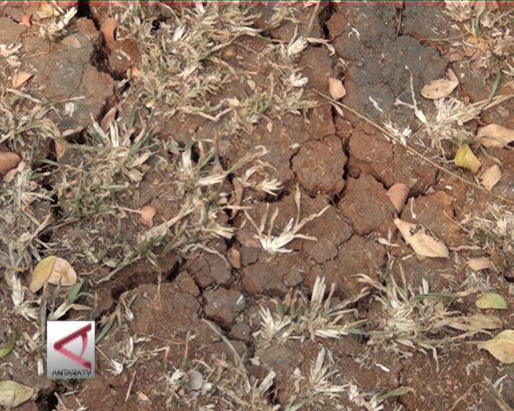 Waspada, El Nino Sebabkan Kemarau Panjang