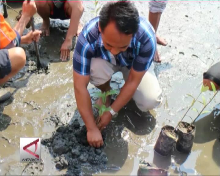Selamatkan Desa Dengan Tanam Mangrove
