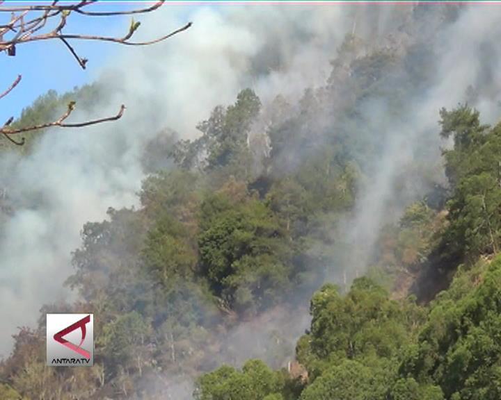Hutan Kintamani Terbakar