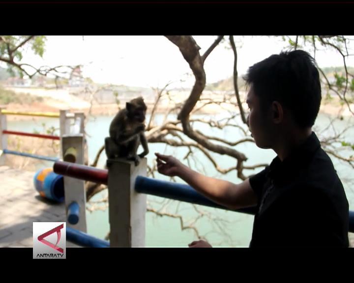Bercengkerama Dengan Monyet di Gua Kreo
