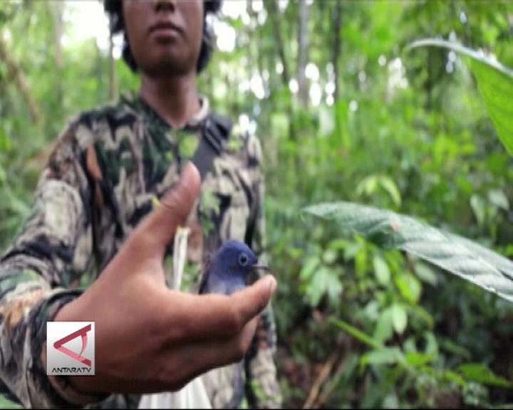 LIPI Temukan Endemik Baru di Pulau Enggano