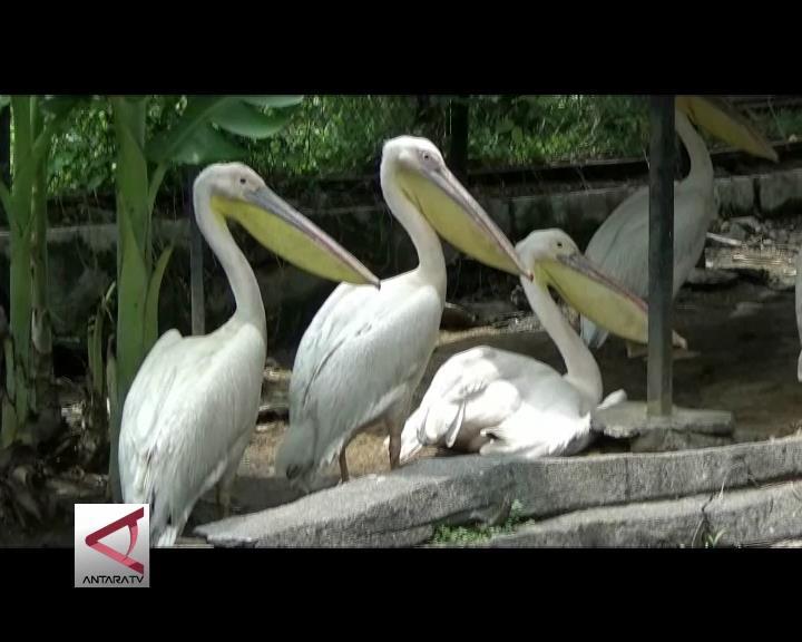 Burung Tanzania Koleksi Terbaru Gembiraloka