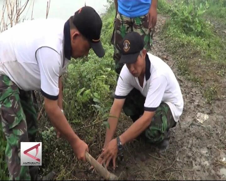 TNI Tanam 100.000 Pohon di Pantura