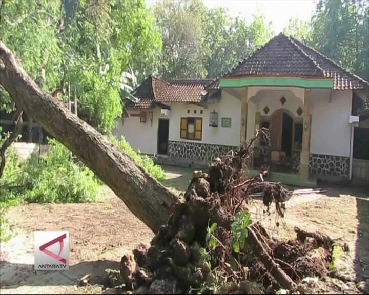 Cuaca Buruk Tumbangkan Pohon di Bantul