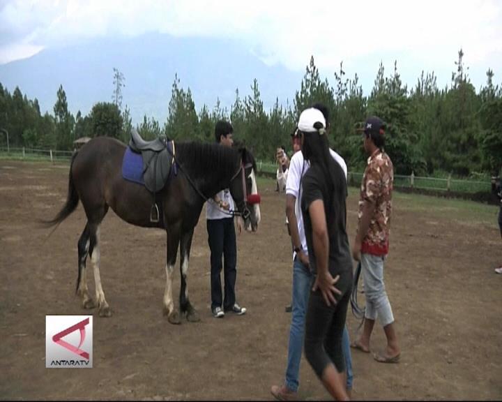 Wisata Berkuda di Area Pegunungan