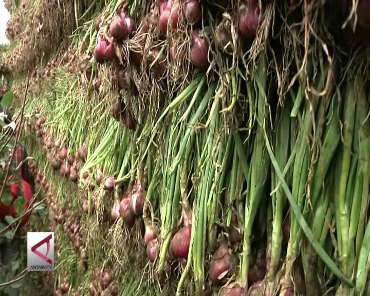 Petani Bawang Merah Mampu  Jaga Kualitas