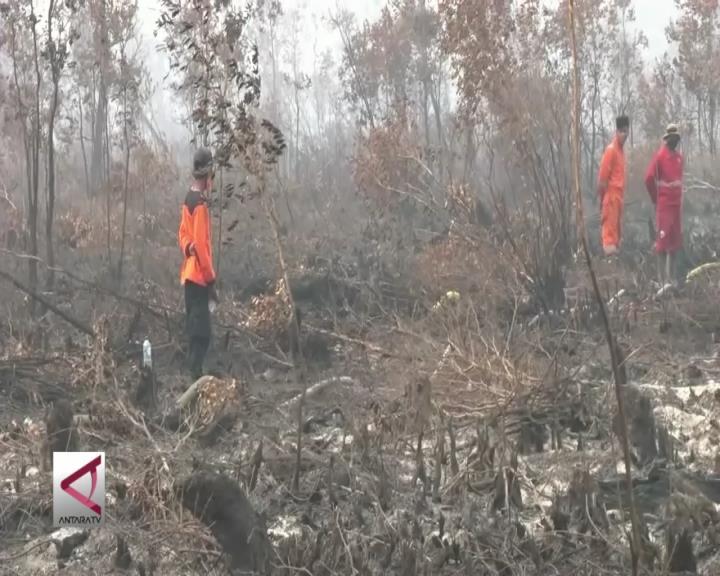 Sulsel Bentuk Gerakan Kendali Kebakaran Hutan