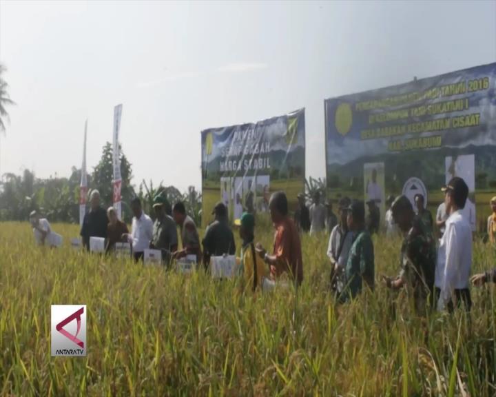 Panen Raya Perdana Padi di Sukabumi