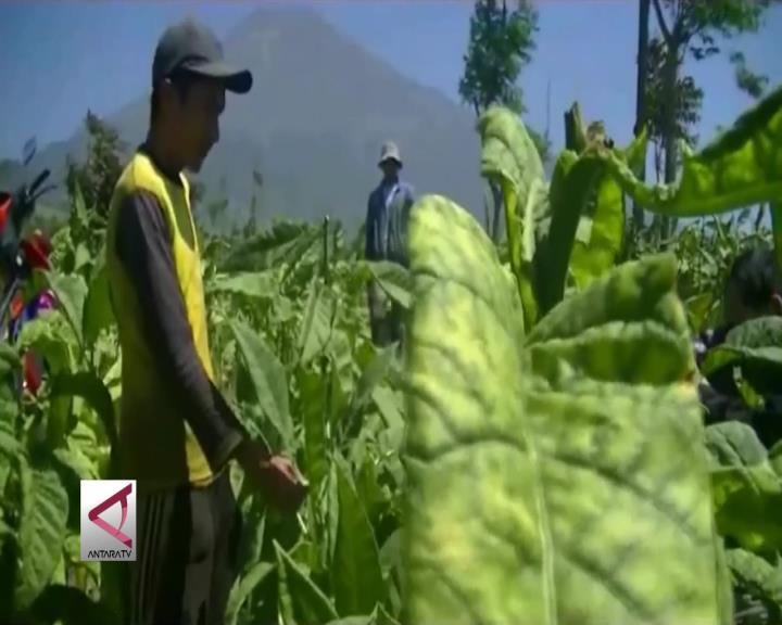 Anggota Komisi III DPR: Batasi Impor Tembakau