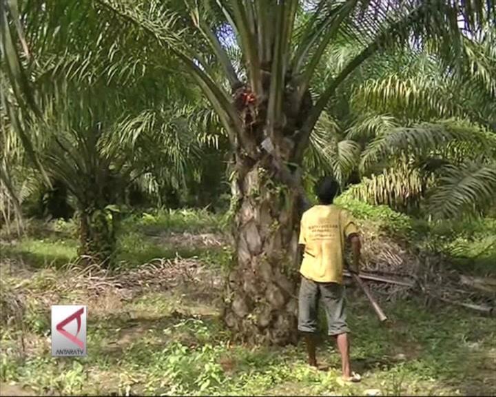 Indonesia Kembangkan Bahan Bakar Berbasis Sawit