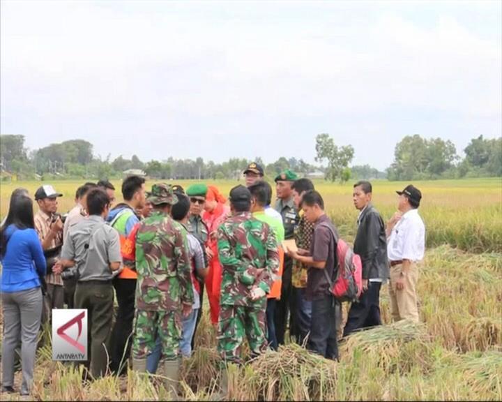 Bulog Lampung Kejar Target Serap Gabah