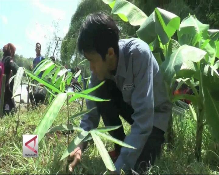 Menanam Bambu Menahan Erosi Sungai