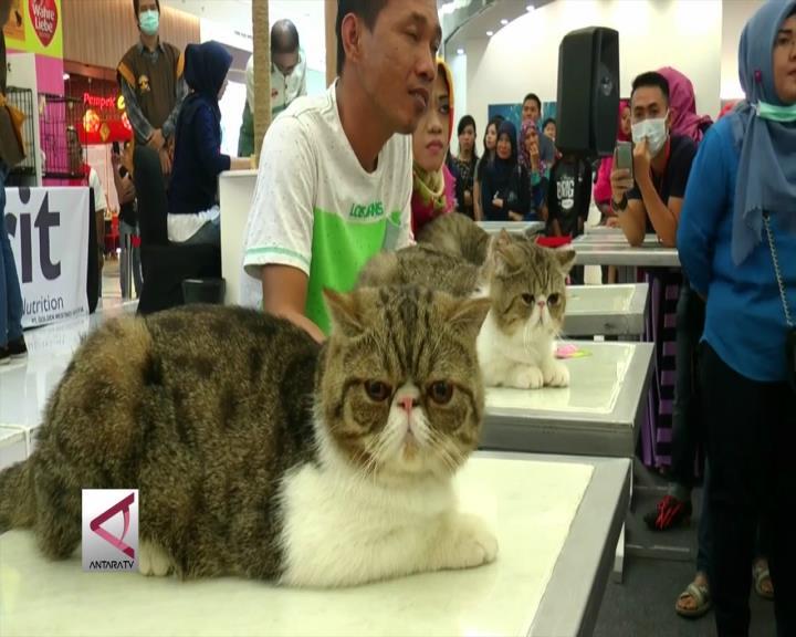 Saat Kucing Lucu Memukau Palembang