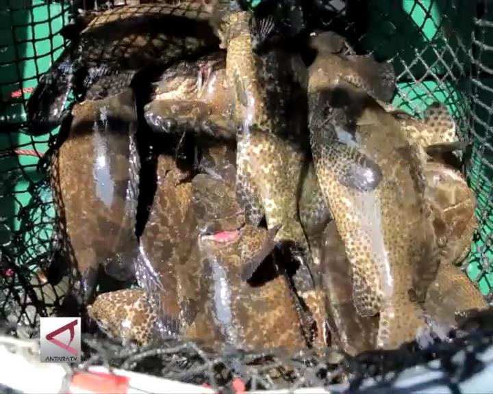 Ekspor Ikan Budidaya Laut 2016 Ditargetkan Meningkat