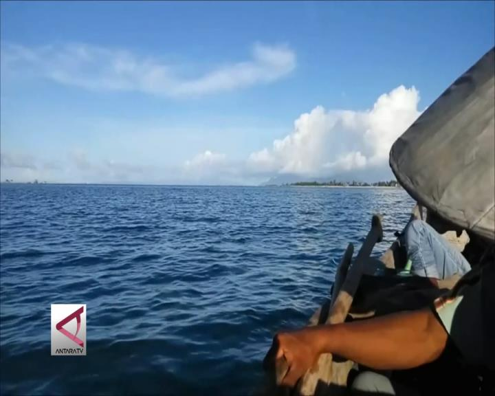 6 Ekor Lumba-Lumba Terdampar di Teluk Kendari