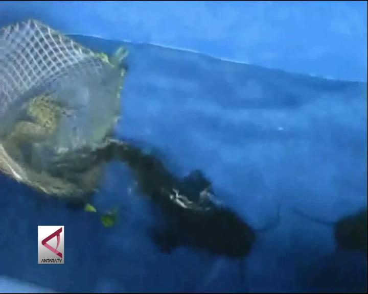 Magelang Berhasil Budidaya Ikan Beong