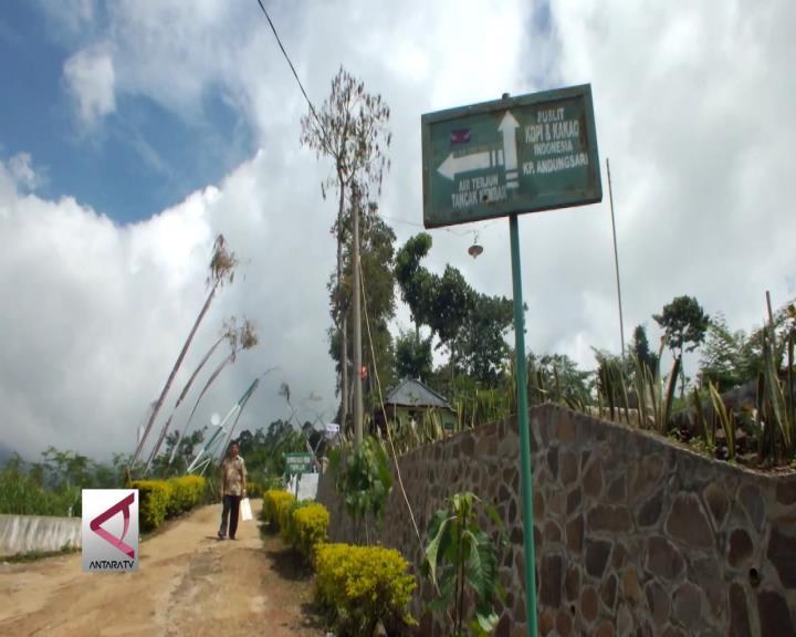 Menikmati Keindahan Republik Kopi di Lereng Argopuro