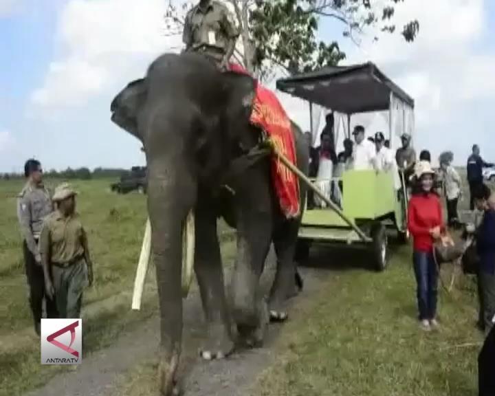 Atraksi Gajah Menggemaskan di Way Kambas