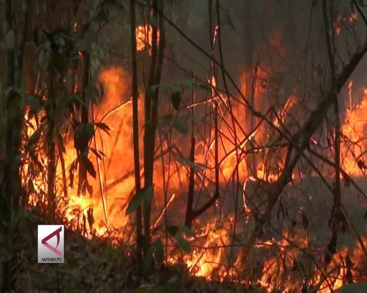 Kebakaran Kembali Terjadi di Dekat Bandara SSK II