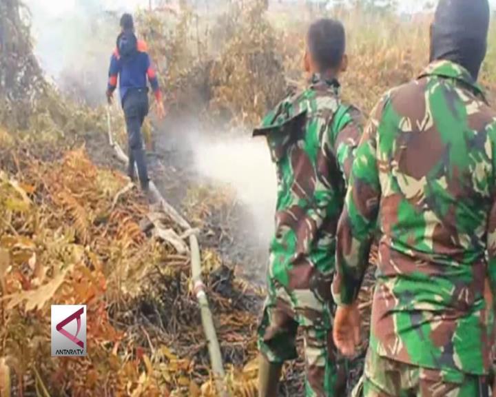 Kebakaran Hutan Turun 61%