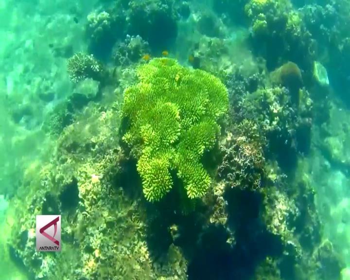 Pesona Bawah Laut Pasir Putih Situbondo