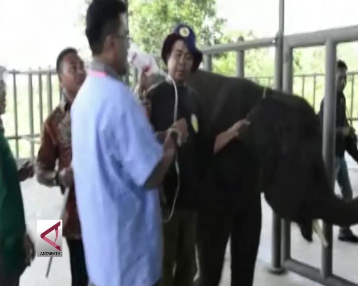 Menengok Rumah Sakit Khusus Gajah di Lampung