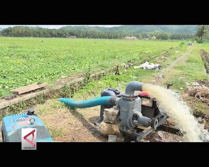 Tergenang, Petani Cabai & Melon Kulonprogo Kerahkan Pompa