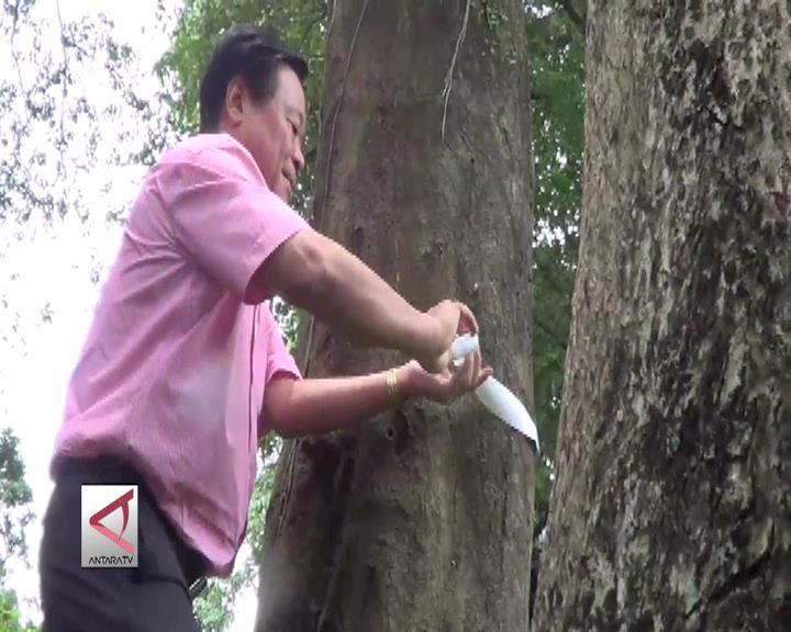 Ikat Pinggang Sederhana Pengukur Karbon Pohon