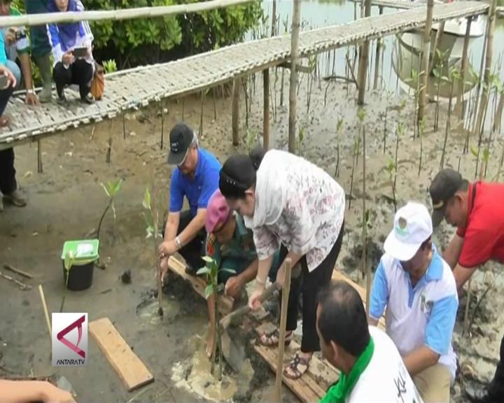 Kawasan Mangrove Menjadi Daya Tarik Wisata