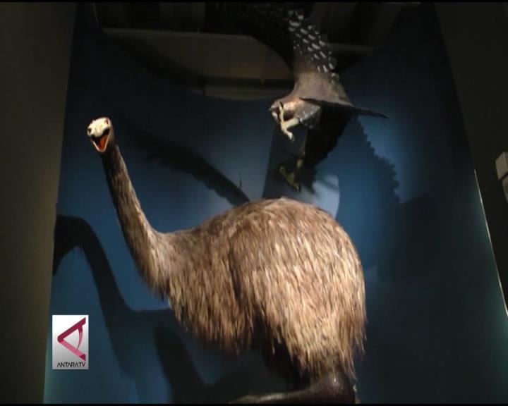 Selami Sejarah Selandia Baru di Museum Te Papa