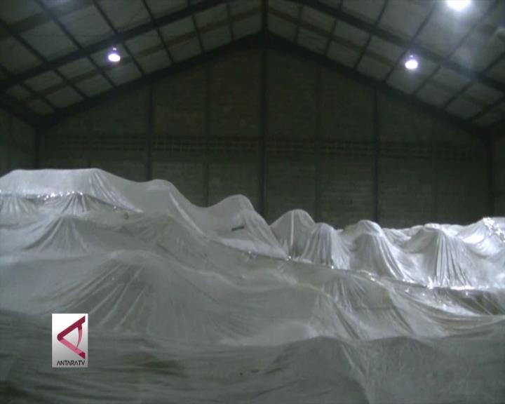 6.800 Ton Gandum Berkutu di Cilegon Difumigasi